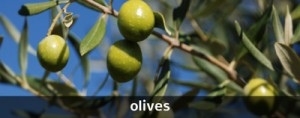 OLIVES_SMALL